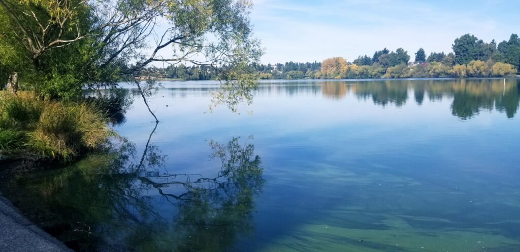 Walking Greenlake is one of my favorite resources for healing trauma in Seattle. Today was beautiful!
