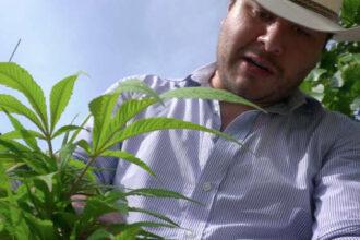 tetecala morelos cannabis