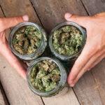 Michigan Medical Marijuana Licensing Update