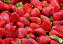 It's Strawberry Time! – The FamilyFunPittsburgh Guide to Strawberry Festivals and Pick-Your-Own