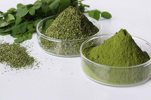 Moringa : Natural Cancer Killer and Anti-Diabetes Herb