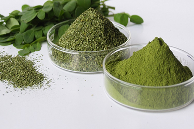 moringa-benefits