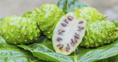 Amazing Noni Fruit Benefits: It Can Kill Many Diseases