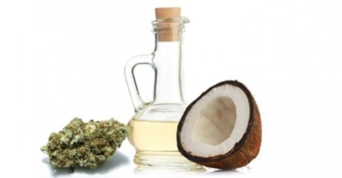 Powerful Combination of Cannabis and Coconut Oil Kill Cancer Cells Fast