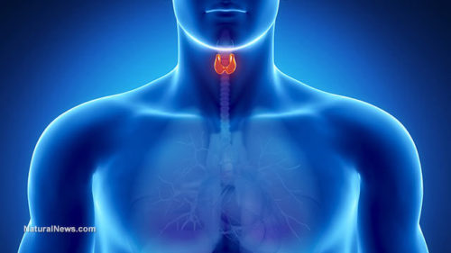 Reset Your Thyroid and Start a Better Life Now