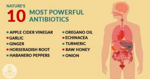 The Most Powerful Natural Antibiotics