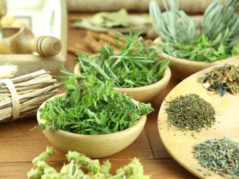 Best Herbs