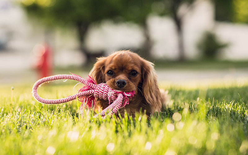 Pets for Sales in New Jersey USA