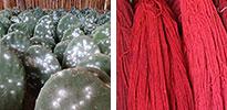 cochineal natural dye
