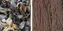 pecan leaf natural dye