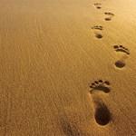 shoes-img-footprint