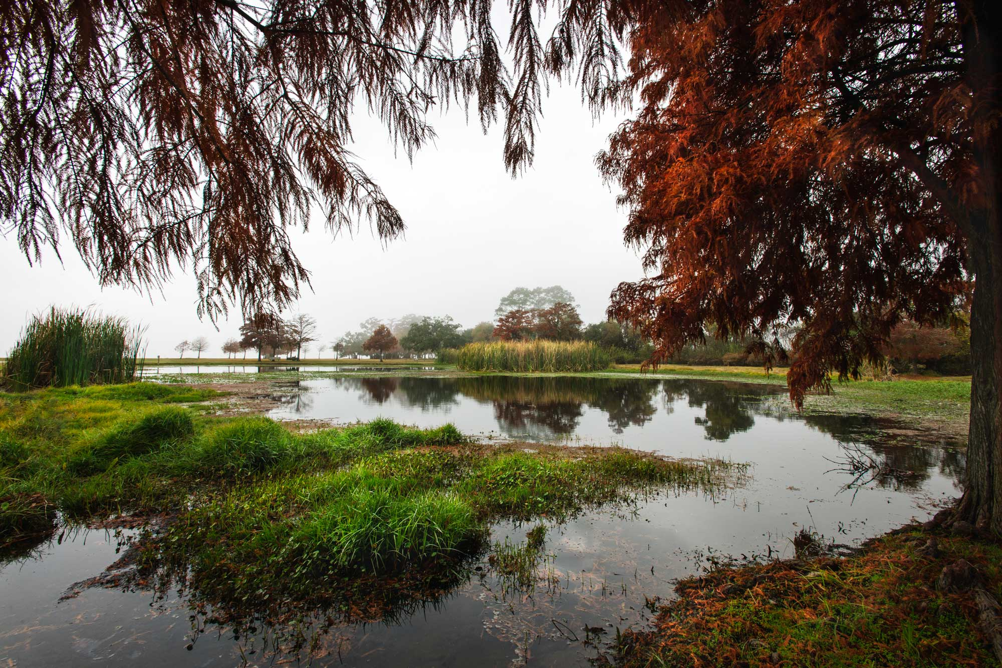Pond and trees