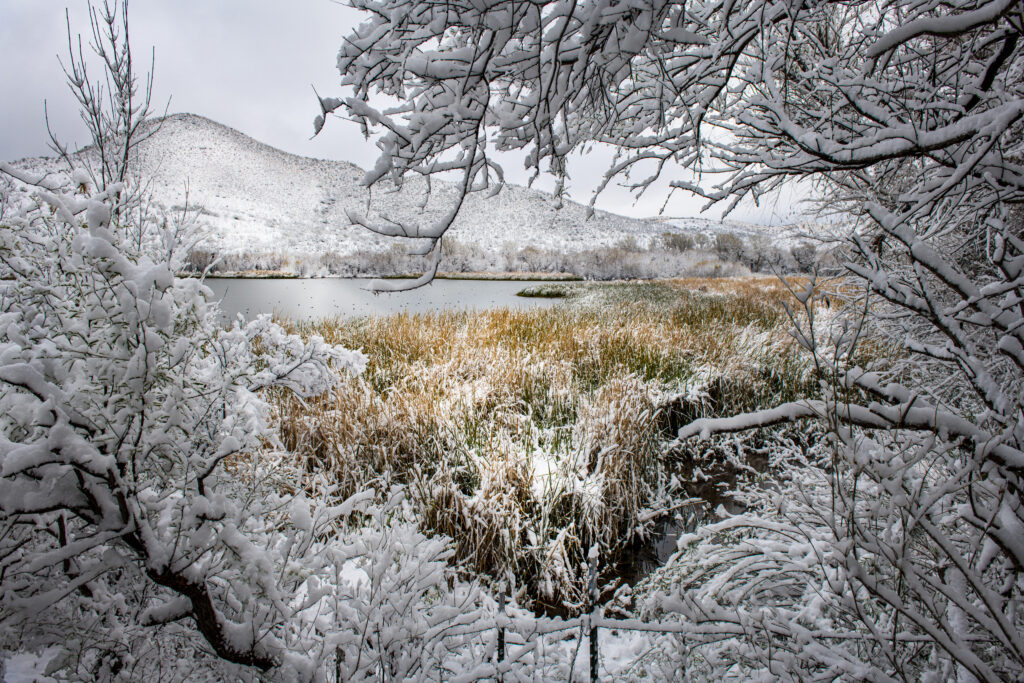 Snow covered landscape with lake and reeds