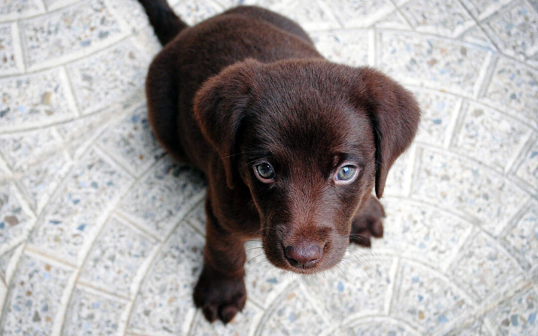 How to Teach Your Pup Basic Commands