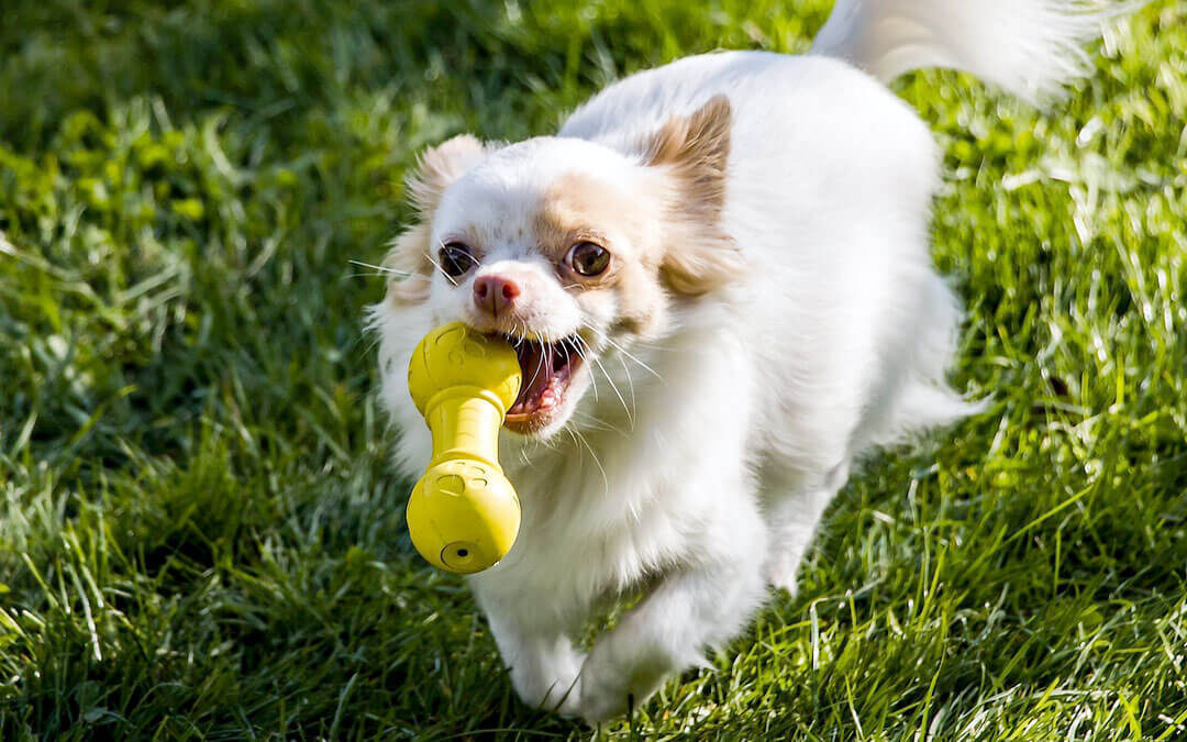 The Best Dog Toys for Your Pup