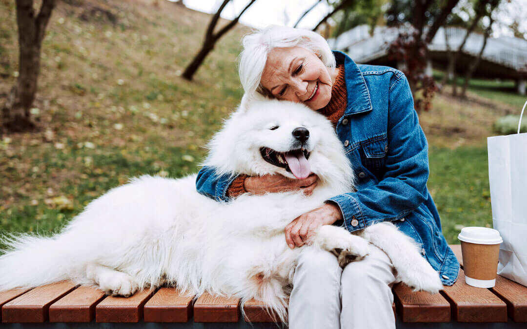 Can You Train Older Dogs?