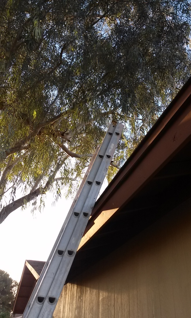 ladder leaning on a house showing the roof and an overhanging tree