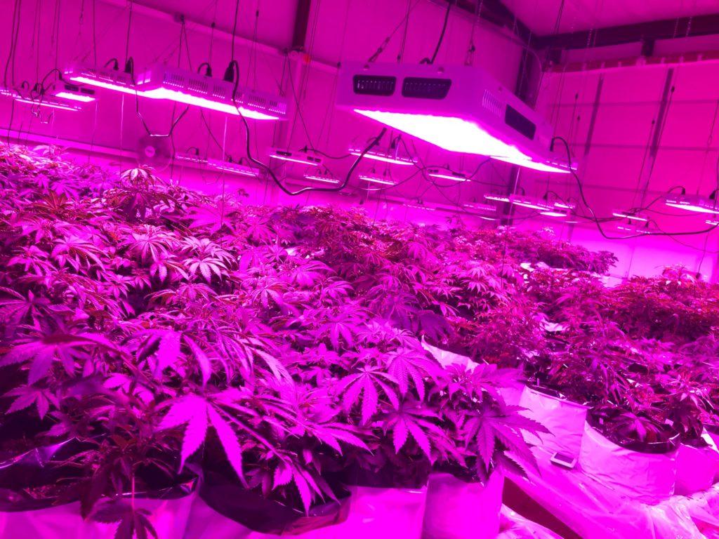 flower room2