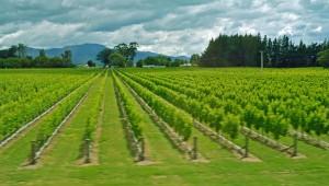 Vineyard after vineyard