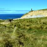 Catlins - Grass near edge of ocean