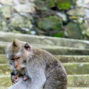 mom and baby monkey