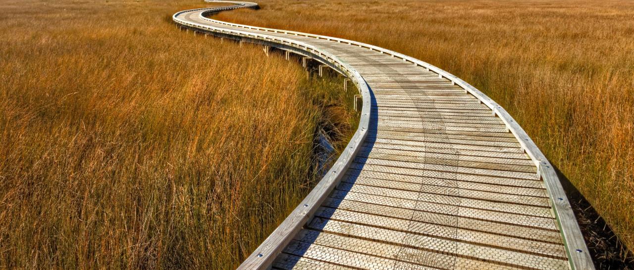 Nature trail on wooden Boardwalk