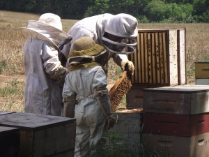 Beekeeping, Honey, Raw Honey