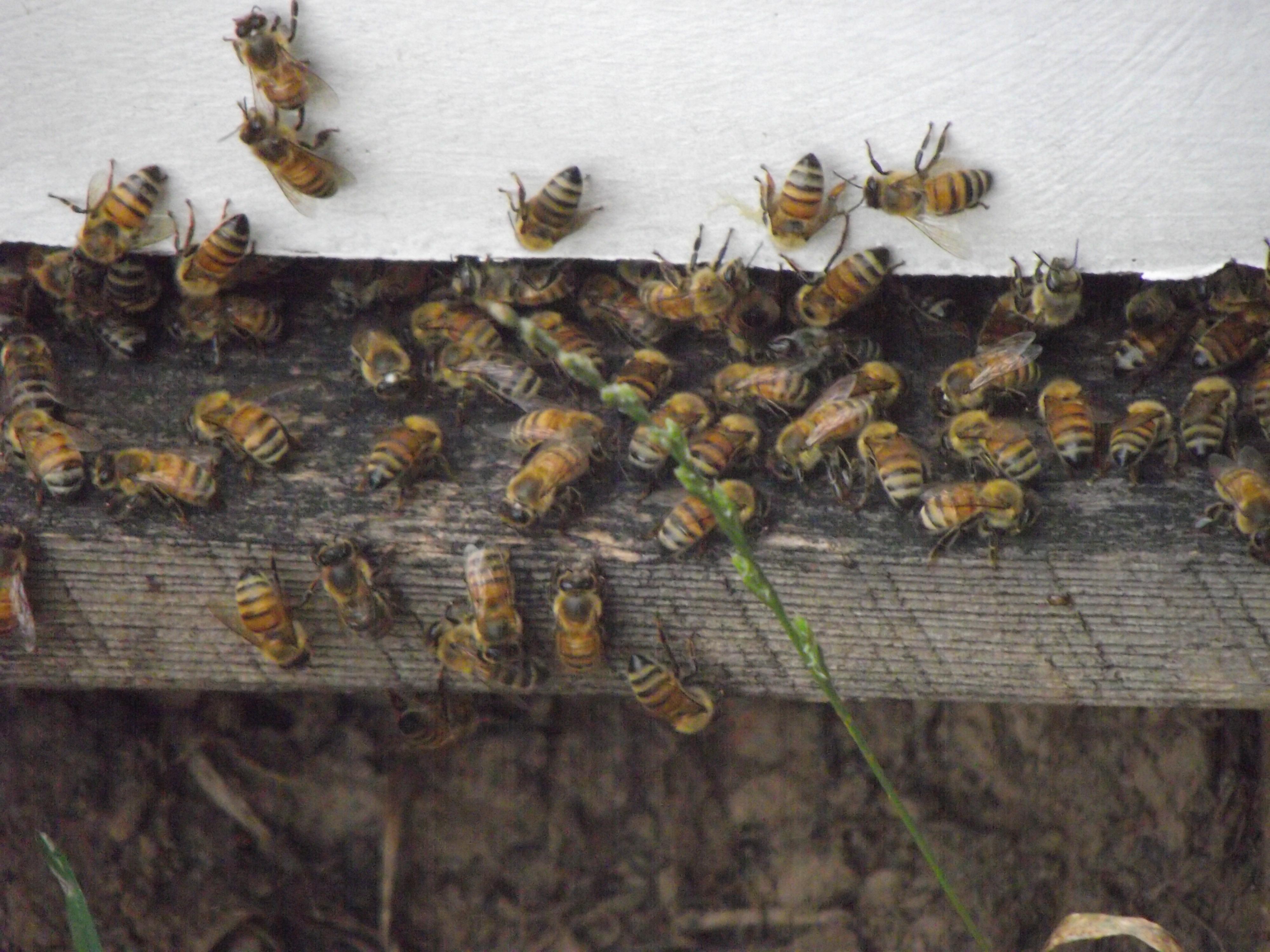 Raw Honey, Local Honey, Pure Honey