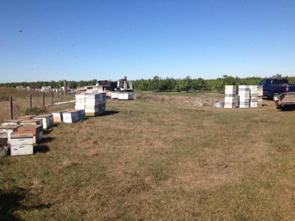 Raw Honey, Local Honey, Honeybees, Orange Blossom Honey