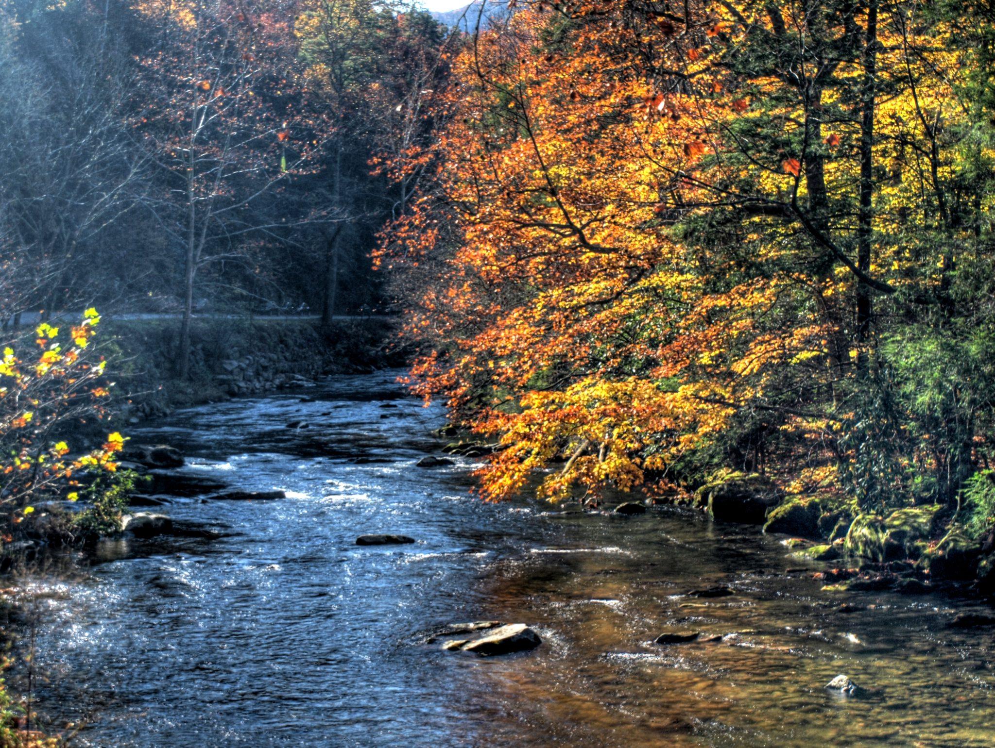 Mountain Stream in October