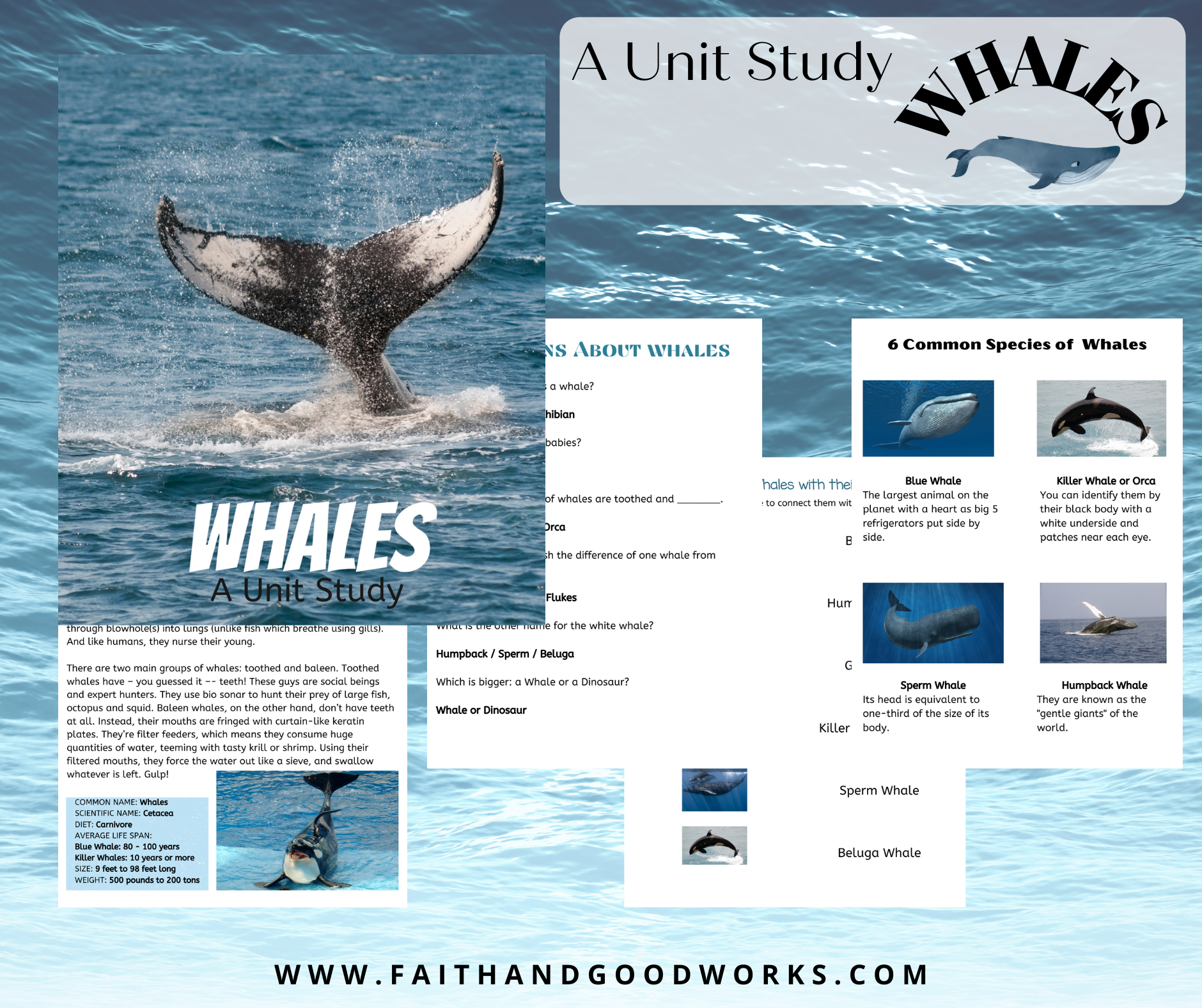 Pictures showing what comes in the whale unit study pack.
