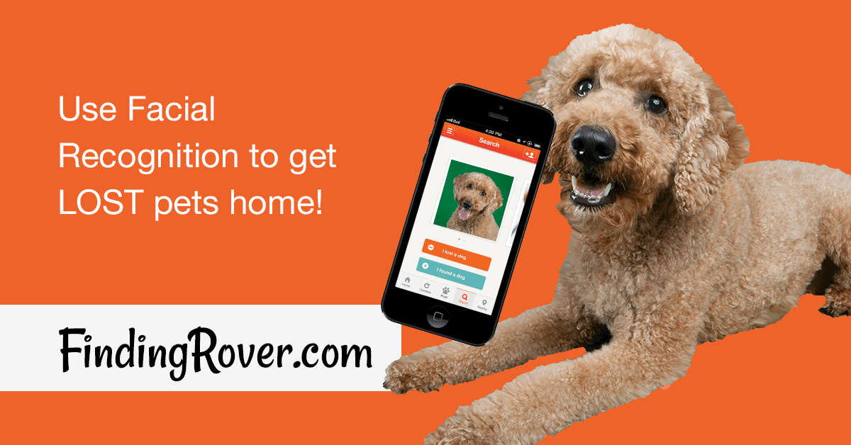 Finding rover 2019 Shelters - Facebook