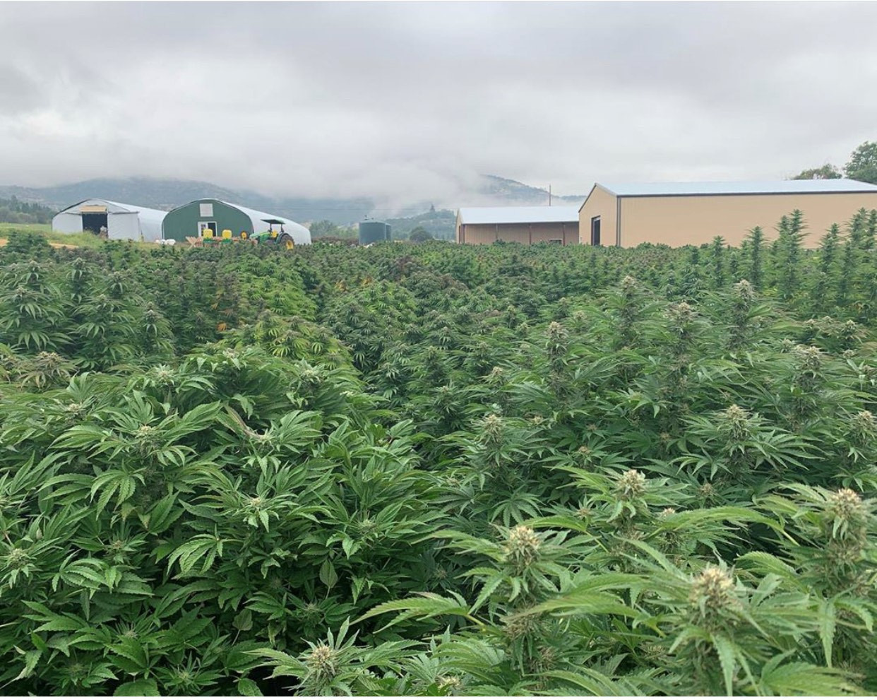 What You Should Know About Recreational Cannabis in Oregon