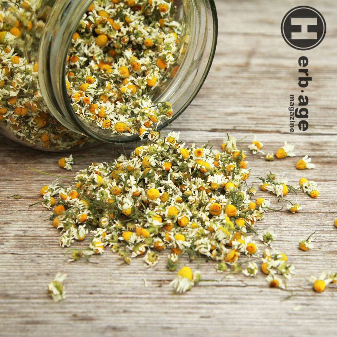 When Cannabis and Chamomile Meet- The Medicinal Benefits