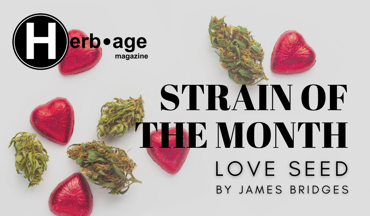 Strain of the Month