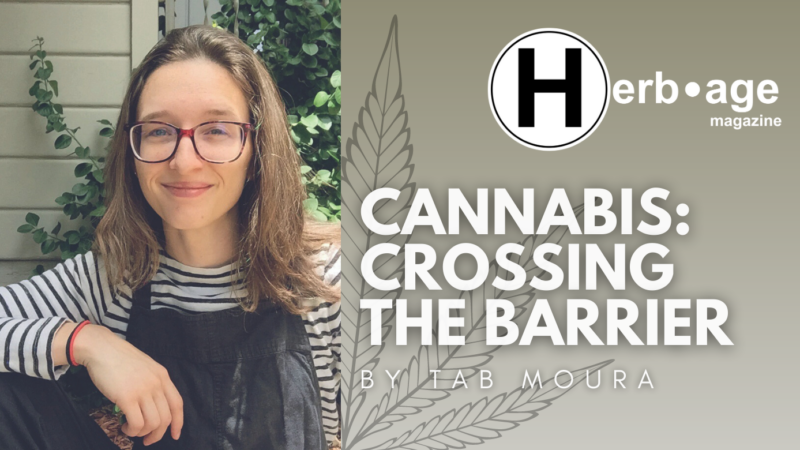 Cannabis: Crossing the Barrier