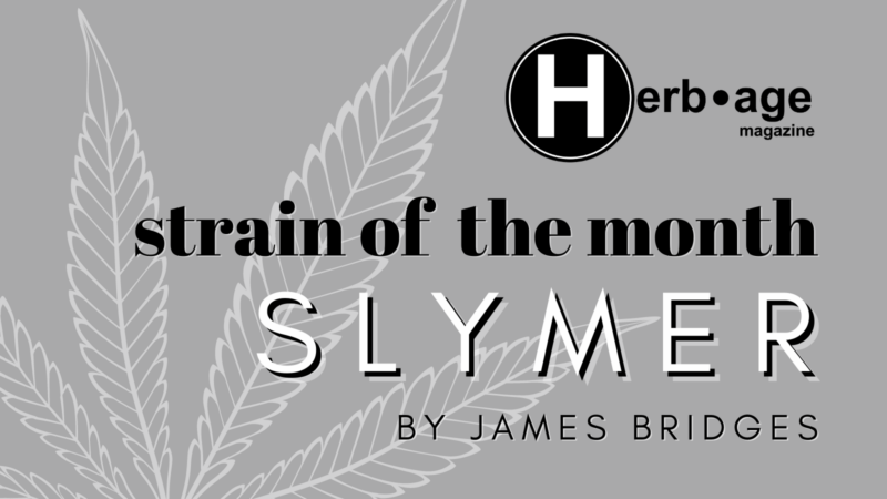 Strain of the Month: March 2021