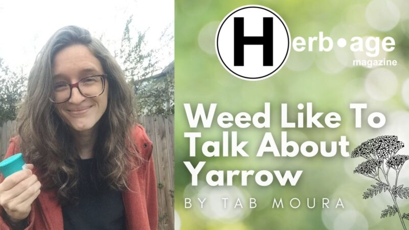 Weed Like To Talk About Yarrow