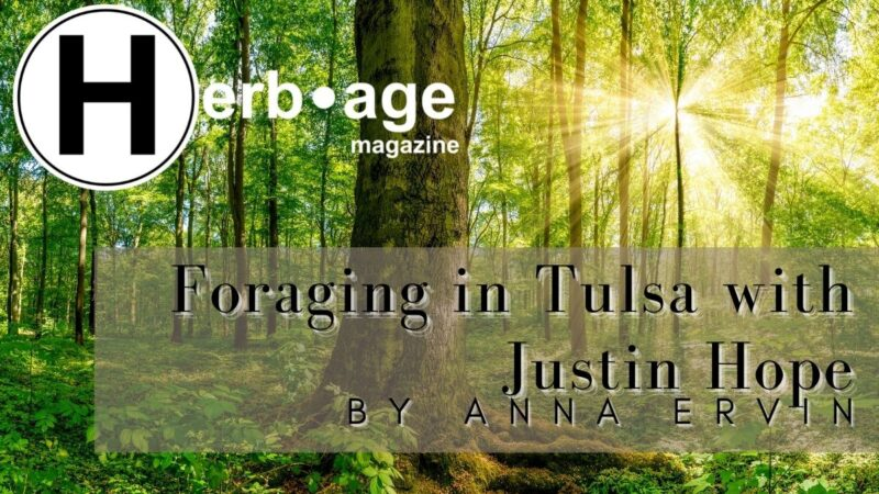 Foraging in Tulsa with Justin Hope