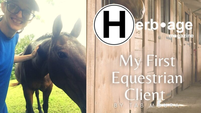 My First Equestrian Client