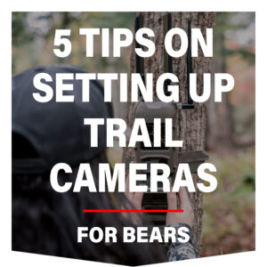 5 Tips On Setting Up Trail Cameras For Bears