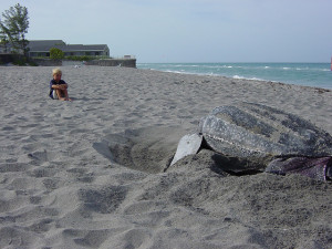 sea-turtle-hatching