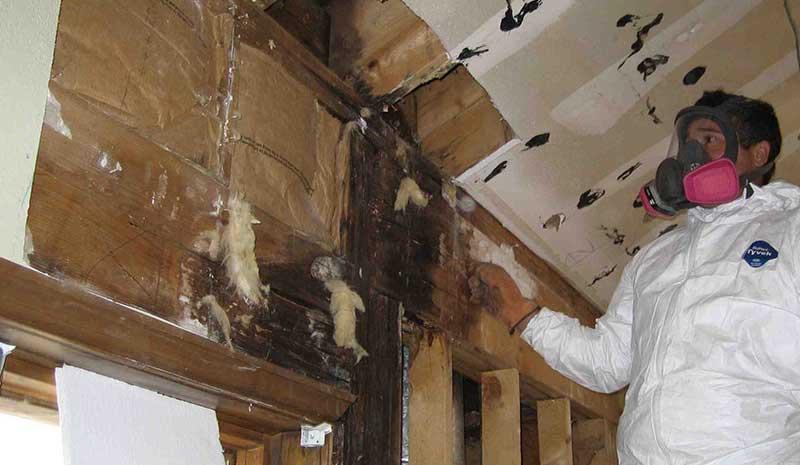 attic mold remediation toronto