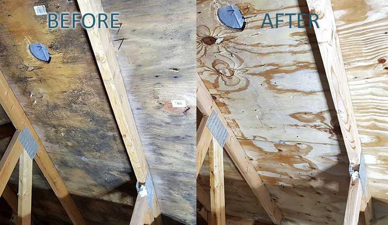 attic mold removal company