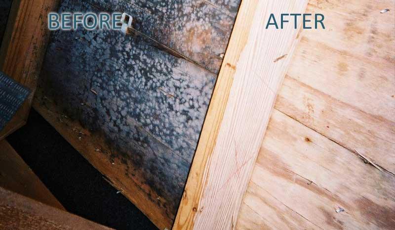 attic mold toronto