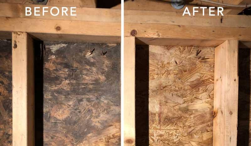 basement mold removal toronto