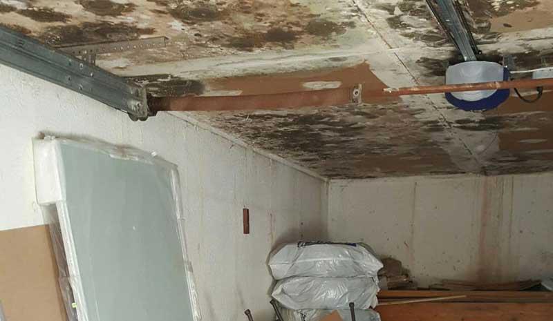 black mold in basement