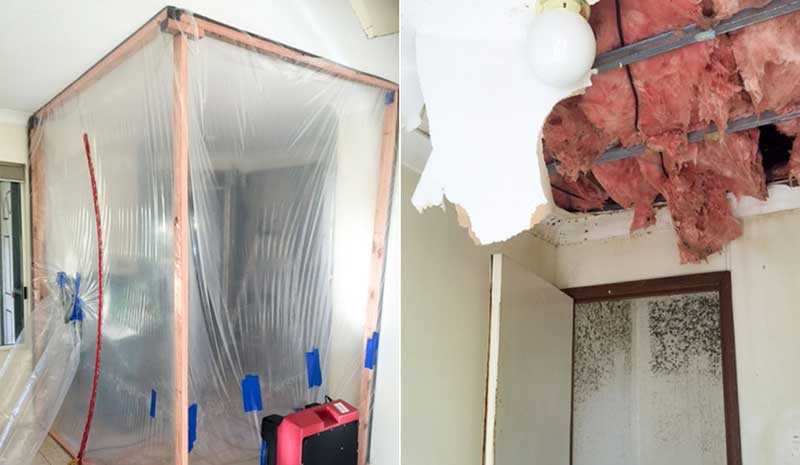 mold remediation company