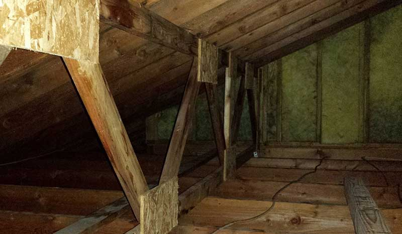 removing mold from attic