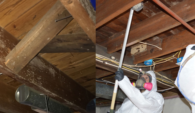 toronto crawl space mold-removal